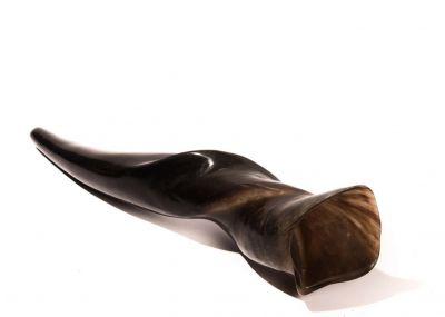 Rare Eland Shofar - Large